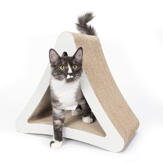 Top Cat Products of the Year Picked by Cat Fancy Cat Fancy and its product-testing kitten models tried the latest toys, trees, carriers and bowls and selected the best.