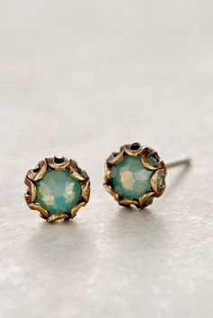 scalloped sea studs