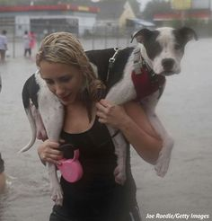 Freekibble and Our Sponsor Halo, Are Donating 5 X's the Kibble Today – All Going to Care for Pets Impacted by the Hurricane – Freekibble