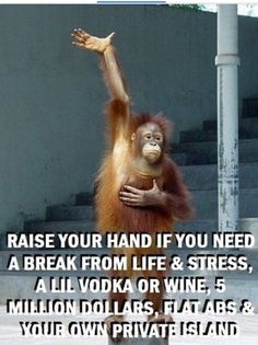 Top 60 Funny Memes And Hilarious Sayings 50 - Funny Monkeys - Funny Monkeys meme - - Top 60 Funny Memes And Hilarious Sayings 50 The post Top 60 Funny Memes And Hilarious Sayings 50 appeared first on Gag Dad. Haha Funny, Funny Jokes, Hilarious Sayings, Funny Stuff, Funny Monkey Memes, Monkey Humor, Funny Memes For Him, Funny Cartoons, Funny Animal Pictures