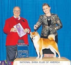 #Brits triumphant in US by Simon Parsons #dogs #dogshows #dogshowing #showdog
