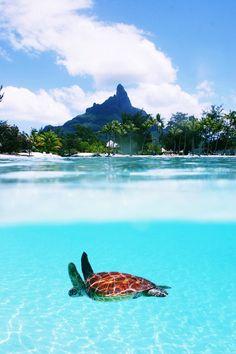 O que achei mais surpreendente. As tartarugas e a cor da água. #QueroNadar