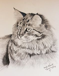 Maine Coon Cat Dusty by Carolyn Valcourt