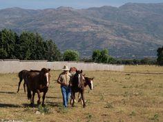 La parada de sementales del Cifea de Lorca permitirá inseminar este año a cerca de 200 yeguas