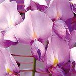 Návod na únorový řez révy vinné: test odhalí, o kolik oček zkrátit - Užitková zahrada Rv, Flowers, Plants, Motorhome, Camper Tops, Florals, Royal Icing Flowers, Flower, Blossoms