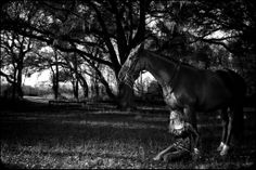 Horse and People Portraits. GregorioPhotography.com