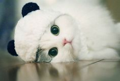 Look me in the eyes and you will grow to like me. Baby Animals Super Cute, Cute Baby Cats, Cute Cats And Kittens, Cute Funny Animals, Kittens Cutest, Cute Dogs, Super Cute Kittens, Beautiful Kittens, Pretty Cats