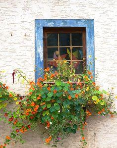 Blue Window View - with window box Nasturtium Window Box Flowers, Window Boxes, Flower Boxes, Cottage Windows, Chicken Garden, Balcony Plants, Window View, Dream Garden, Windows And Doors