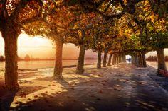 Wege Herbst Allee Bäume lady in blue Natur
