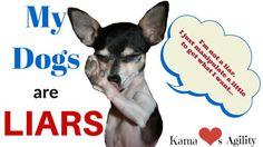 My Dogs are Liars | KamaLovesAgility