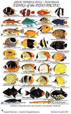 Saltwater Aquarium Fish Guide