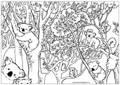 """Have some puzzling fun with an Australian animals theme. We've got a counting koala puzzle and colouring page for little kids, word search, boggler and a """"find the difference"""" puzzle to print out. Fathers Day Coloring Page, Coloring Pages For Boys, Animal Coloring Pages, Colouring Pages, Kids Colouring, Colouring Sheets, Coloring Book, Adult Coloring, Australia For Kids"""