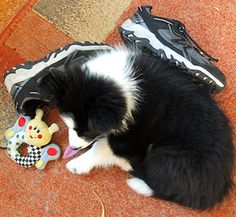 Winnie sleeps with toys and shoes.