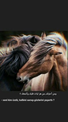 Mercedes Girl, King Horse, Arabic Love Quotes, Couple Aesthetic, Muslim Couples, Aesthetic Backgrounds, Book Quotes, Horses, Twitter