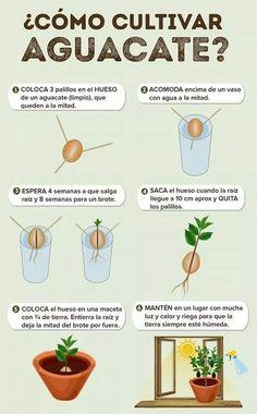 Eco Garden, Vegetable Garden Design, Natural Garden, Fruit Garden, Growing An Avocado Tree, Herbs Indoors, Growing Vegetables, Horticulture, Garden Projects