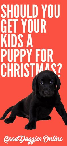 Are your kids begging you for a puppy for Christmas? If so, find out if it's a good idea by reading this article. #dogs #puppies #Christmas