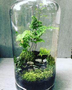 Las w słoiku Las zamknięty w szkle Miniogród - All For Herbs And Plants Mini Terrarium, Bottle Terrarium, How To Make Terrariums, Air Plant Terrarium, Bottle Garden, Ideas Florero, Cool Plants, Small Gardens, Container Gardening