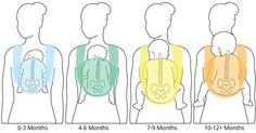 Vyvoj chrbatika a noziciek pri vertikalnom noseni pocas prveho roka
