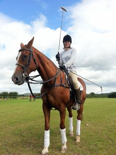 Polo Pony at JF Polo Academy, Chester