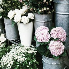 Pinterest: jasminecampos3