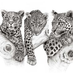 Discover recipes, home ideas, style inspiration and other ideas to try. Snow Leopard Tattoo, Leopard Tattoos, Animal Tattoos, Lion Head Tattoos, Eagle Tattoos, Baby Tattoos, Realistic Pencil Drawings, Animal Drawings, Big Cat Tattoo