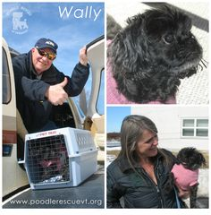 Thanks to a coordinated transport effort, Wally is with his new foster family and ready to be adopted! Wally is an eight year old poodle/shih tzu mix who weighs 14 lbs. If you're interested in adopting Wally, please fill out an adoption application here: http://fs2.formsite.com/PRVT/form2/index.html
