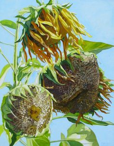 """Neiley Harris: """"Sun Baked Bird Seed"""""""