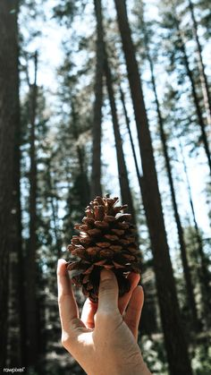 Free Photos, Cool Photos, Amazing Photography, Nature Photography, Image Fun, Summer Landscape, Man Images, Wild Nature, Pine Cones