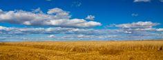 Fields on the Prairie