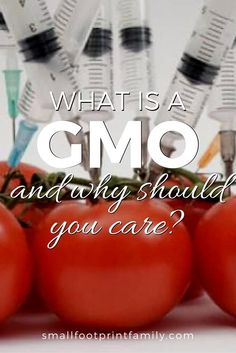 Gmo Free Gardening Unless you know what is a GMO and how to avoid them, you will inevitably become a guinea pig in the vast health experiment being perpetuated on us all. Organic Gardening Tips, Organic Farming, Gmo Facts, Genetically Modified Food, Natural Living, Natural Baby, Cleaners Homemade, Busy Life, Organic Recipes