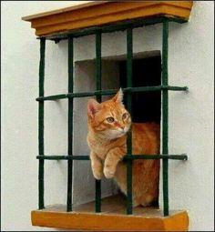 cat chillin' in window