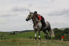 Romeo! - Oustanding Potential Superstar!! http://www.equineclassifieds.co.uk/Horse/oustanding-potential-superstar-listing-1044.aspx#.VCLhclcTCZY