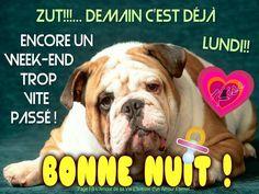 Zut!!! Demain c'est déjà Lundi!! Encore un week-end trop vite passé ! Bonne Nuit ! #demaincestlundi chien fin du week end courage