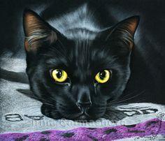 Black Cats My Sunshine Irina Garmashova Cats