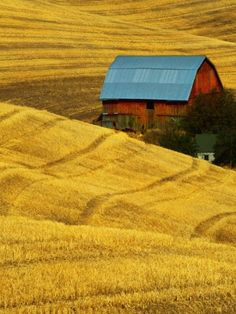 Barn and Golden Wheat Field Photographic Print by Robert Crum Item #: 8664387