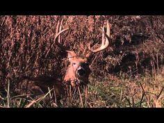 Tree Stand Placement in the Late-Season - Deer & Deer Hunting TV