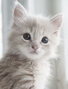 \An ordinary kitten will ask more questions than any 5 year old.\ --Carl Van Vechten