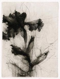 Jake Muirhead / Middlebury Irises, 2011 / etching and drypoint (two plates - 1 of / 9 x 12 Gravure Illustration, Illustration Art, Intaglio Printmaking, Collagraph, Drypoint Etching, Etching Prints, Botanical Art, White Art, Graphic Art