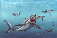 Scientists New, Mysterious Prehistoric Shark