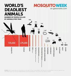 Неожиданно, москиты самые убийственные твари, потом уже человек