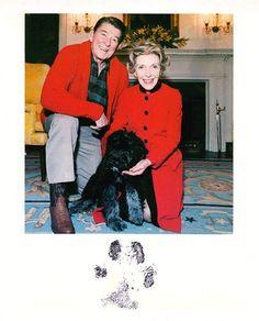 Ronald Reagan's Dog Lucky | Presidential Pet Museum ripp that doggo.