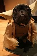 I just laughed so much I cried. Oh. My. Gosh. I'm dying right now. #frenchbulldog #sofunny