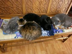 We work our hospital cats hard. They have been assigned the task of holding down the bench in our reception area. They are doing a fine job, don't you think? From left to right we have Iris, Zeta, Elam, Chessie and Howie. Reception Areas, Iris, Little Girls, Bench, Cat, Friends, Animals, Amigos, Toddler Girls