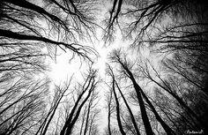 100+ Awe Inspiring Black & White Photographs