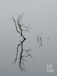 Abstract View of a Branch and its Reflection on Still Water Photographic Print by Todd Gipstein at Art.com