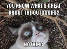 I love this cat!