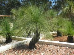 Grasstree Display2 | Grasstrees Australia