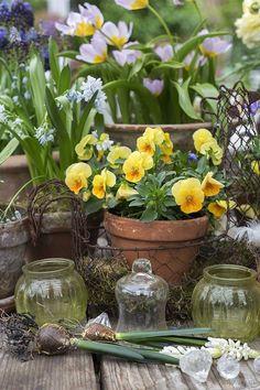 Love Garden, Dream Garden, Garden Pots, Pot Jardin, Terracota, Garden Pictures, Spring Is Here, Farm Gardens, Spring Garden