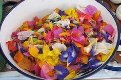 Блюда из цветов: фиалковое желе  http://www.dostavka-tsvetov.com/news/bljuda_iz_cvetov_fialkovoe_zhele/2014-03-30-357