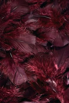 Burgundy feathers